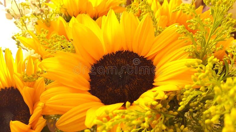 Zonnebloem stock fotografie