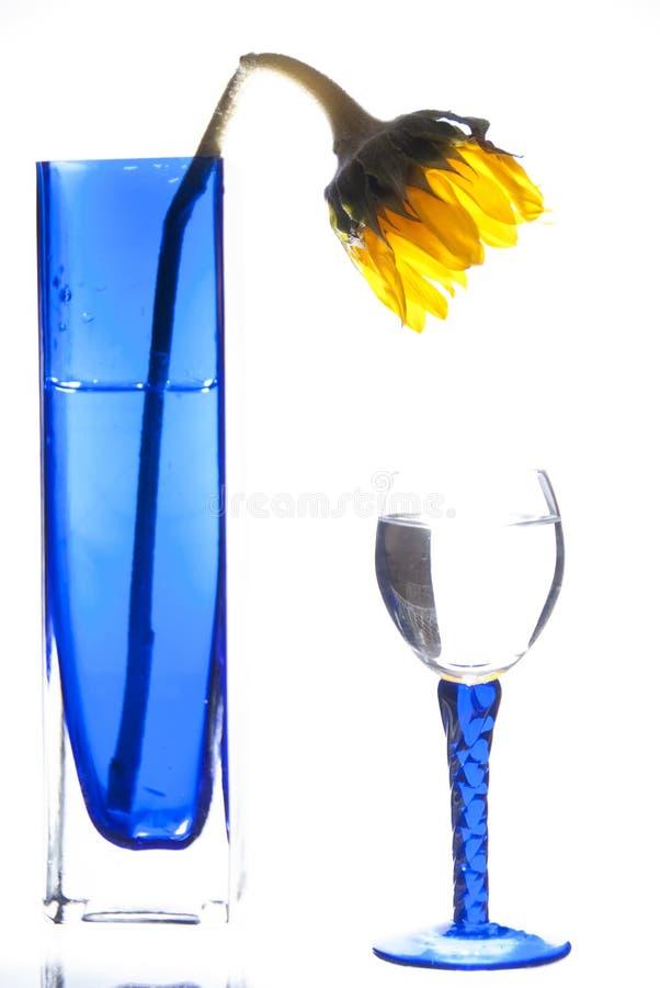 Zonnebloem in blauwe vaas met blauw glas stock afbeeldingen