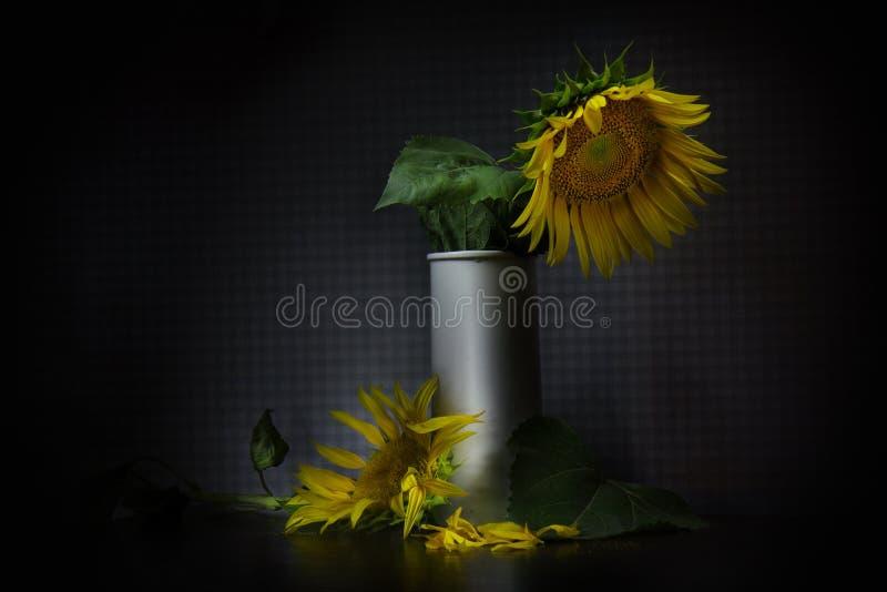 zonnebloem in een vaas stock afbeeldingen