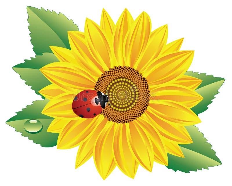 Zonnebloem en onzelieveheersbeestje vector illustratie