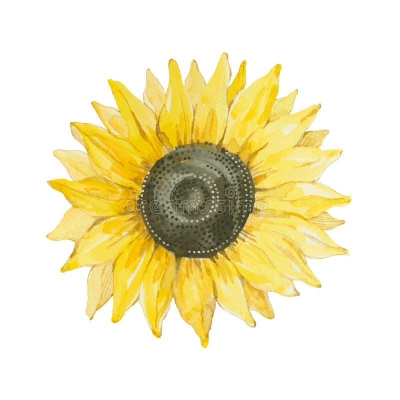 Zonnebloem op een witte achtergrond wordt ge?soleerd die Vector, waterverfhand royalty-vrije illustratie