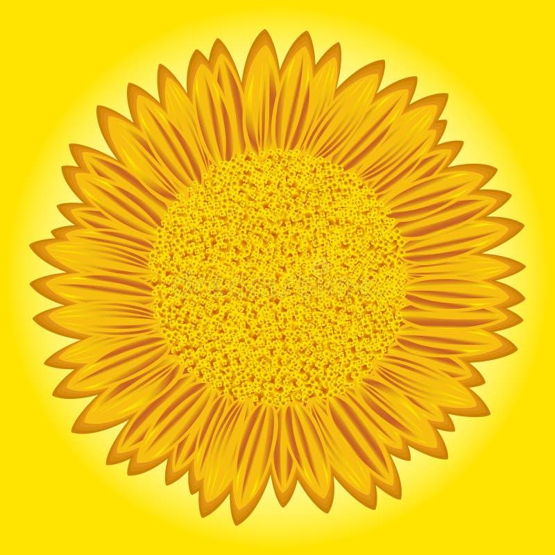 Zonnebloem op gele achtergrond royalty-vrije illustratie