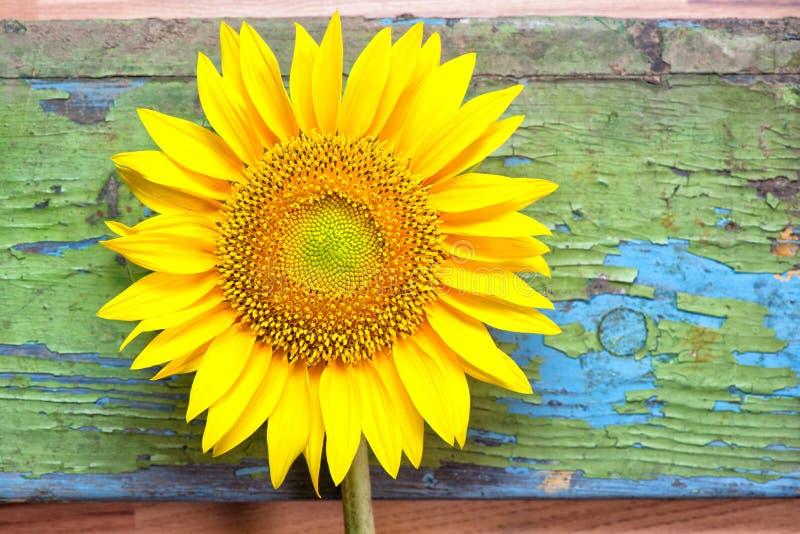 Zonnebloem op houten achtergrond stock foto
