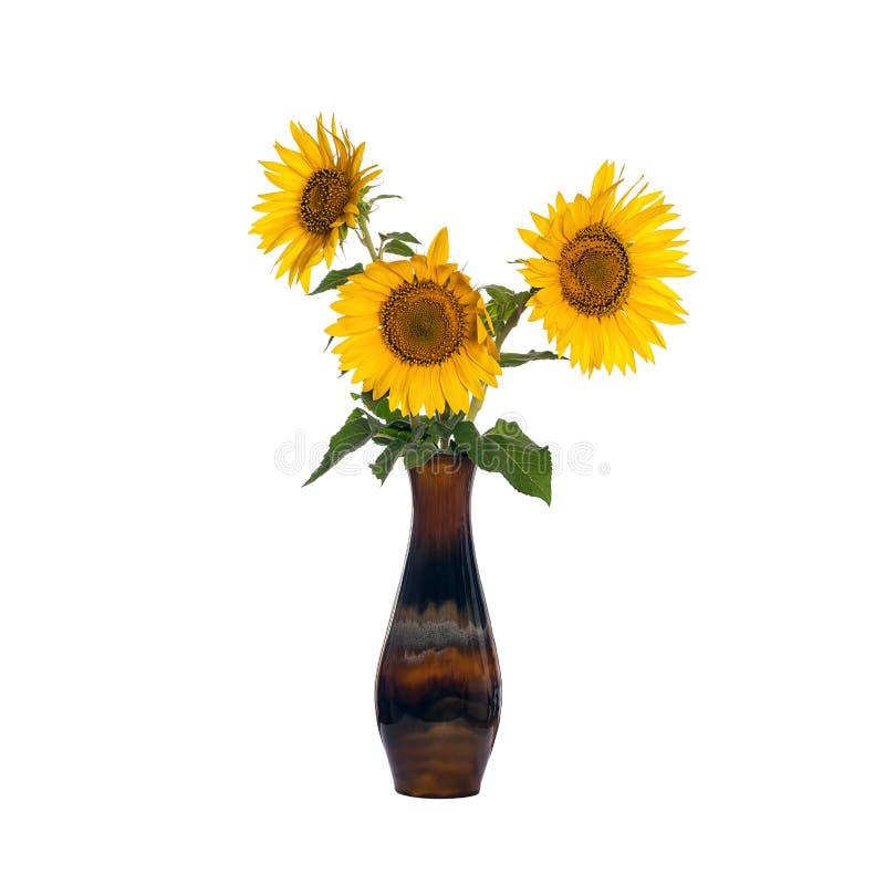 Zonnebloembloemen in een oude die porseleinvaas op wit wordt geïsoleerd royalty-vrije stock afbeelding