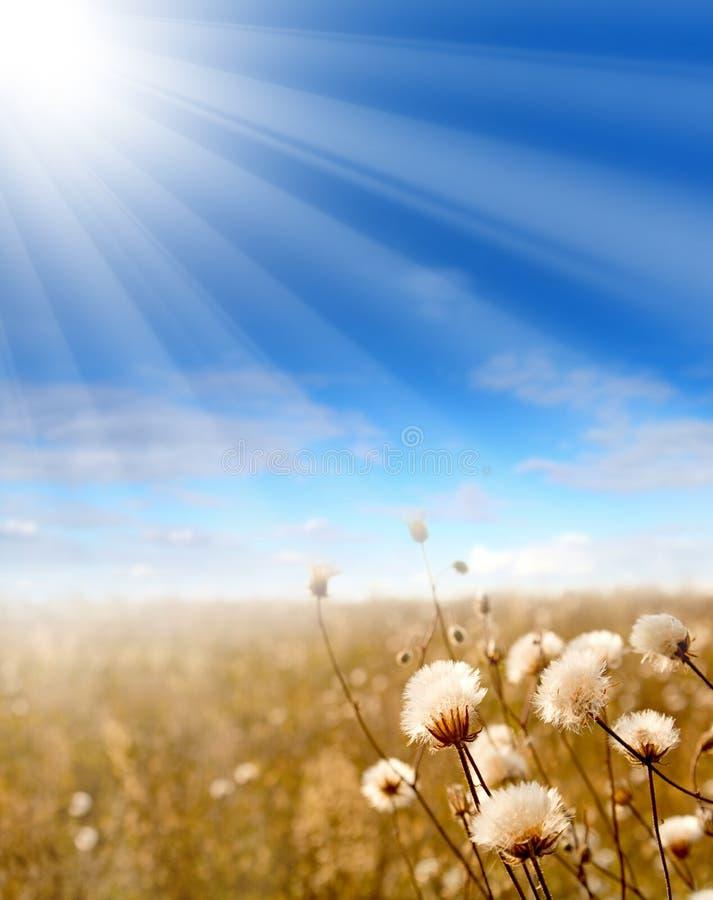 Zonnebloemen Blauwe hemel, wolken royalty-vrije stock afbeelding