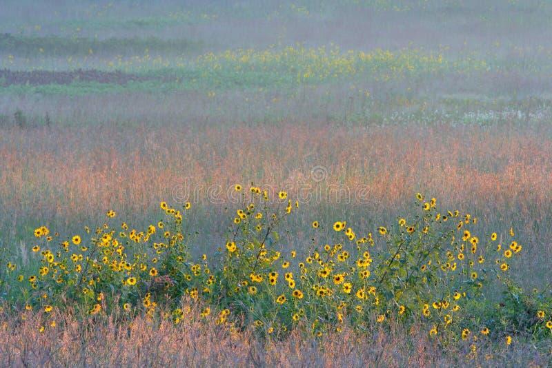 Zonnebloemen en kleurrijke lange grasprairie royalty-vrije stock foto