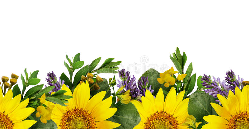 Zonnebloemen en wilde bloemen naadloze grens stock fotografie