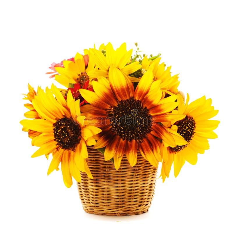 Zonnebloemen in geïsoleerde mand stock foto