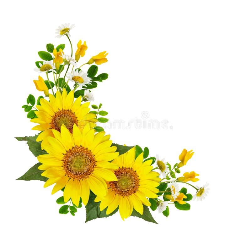 Zonnebloemen, madeliefjes en acaciabloemen en groene bladeren in cor stock afbeeldingen