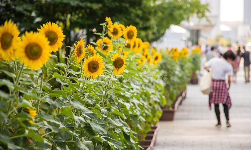 Zonnebloemen op de straten van Tokyo royalty-vrije stock fotografie