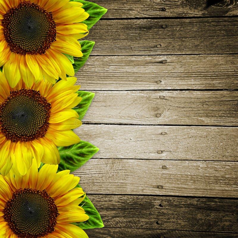 Zonnebloemen op houten achtergrond royalty-vrije illustratie