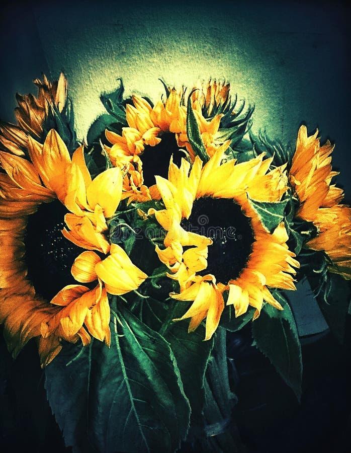 Zonnebloemen voor minnaar stock foto