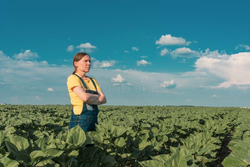 Zonnebloemlandbouwer het stellen op gebied stock fotografie
