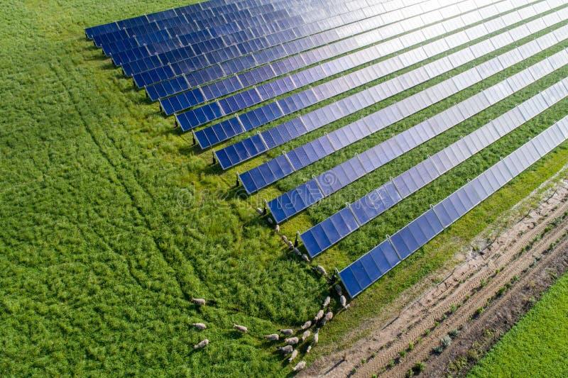 Zonnecollectoren met het met gras bedekken van schapen stock afbeeldingen