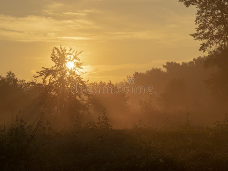 Zonnedageraad in het bos stock afbeeldingen
