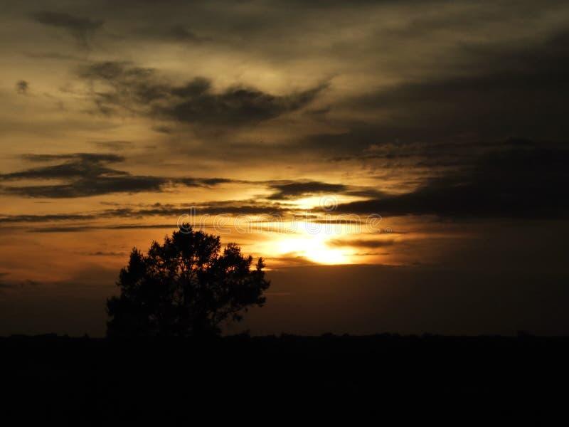 Zonneopkomst zonsopgang over de horizon van een open land met een eenzame boom in de scène stock foto's