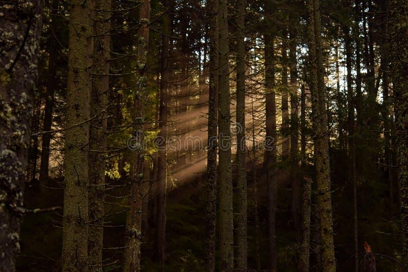 Zonneschijn in de schaduwen van een bos royalty-vrije stock foto's