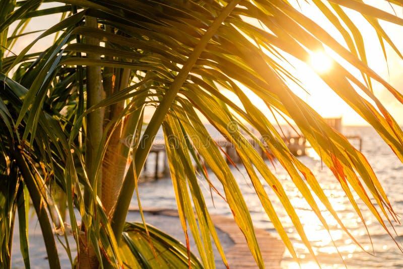 Zonneschijn door de palmvarenbladen stock afbeelding