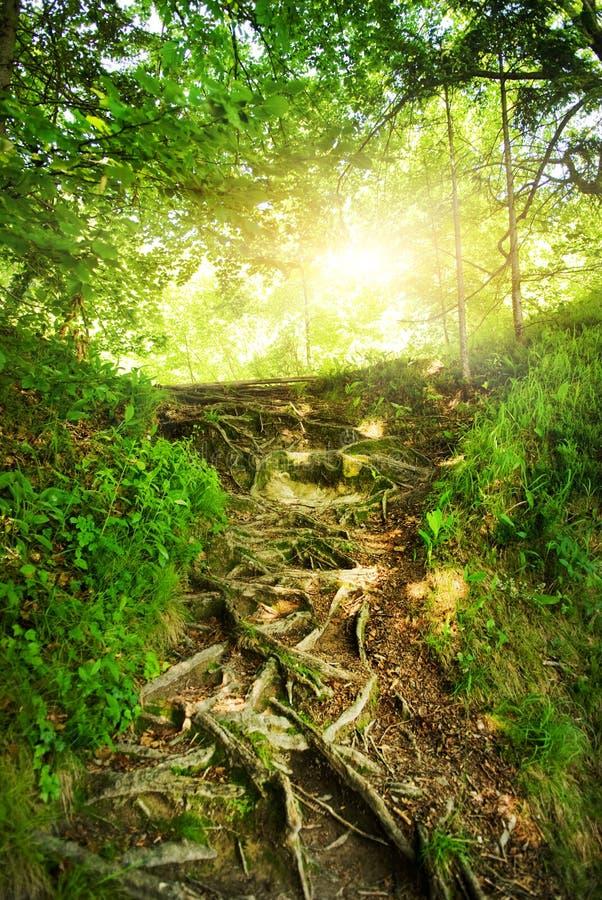 Zonneschijn in een bos stock afbeeldingen
