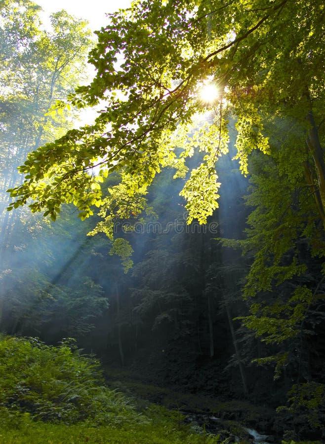 Zonneschijn in een bos stock foto's