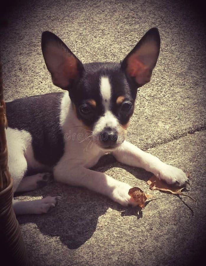 Zonneschijn en puppy royalty-vrije stock fotografie