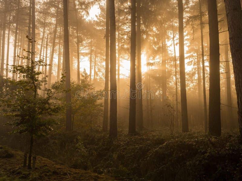 Zonneschijn in het hout royalty-vrije stock foto