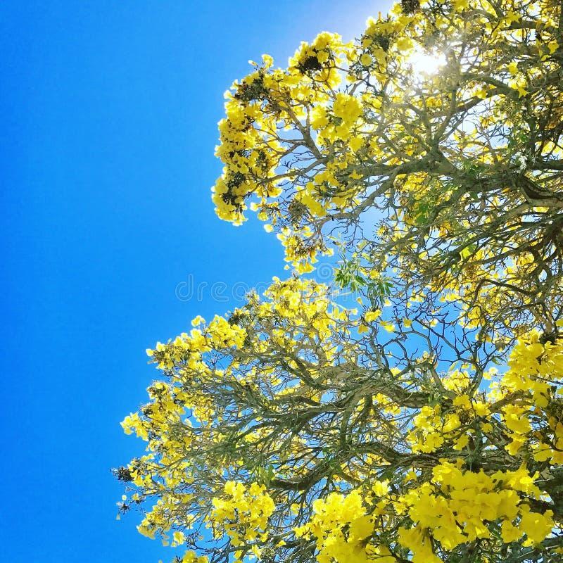 Zonneschijn in Sunshine state stock foto's