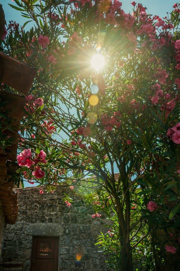 Zonnestraal die door bladdiestruik overgaan door bloemen wordt behandeld stock fotografie