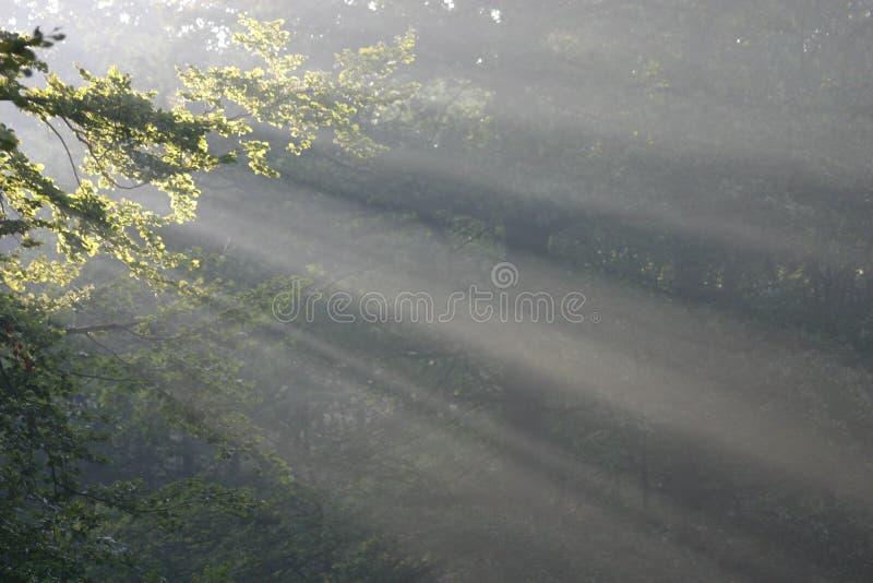 Zonnestralen royalty-vrije stock afbeeldingen