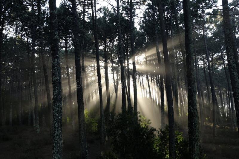 Zonnestralen in het bos royalty-vrije stock afbeelding