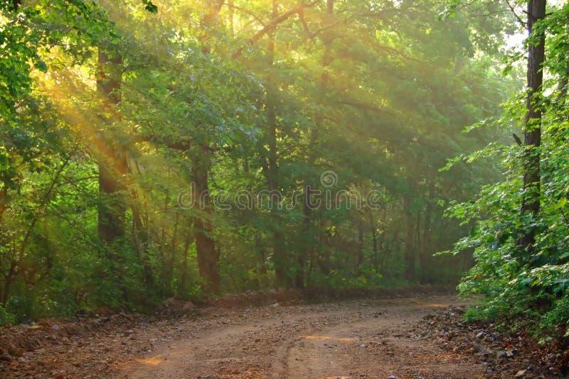 Zonnestralen op een Landweg stock fotografie