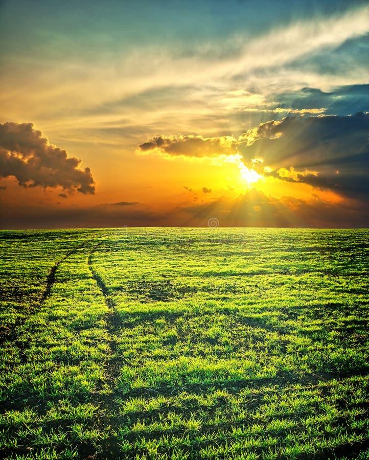 Zonnestralen over groen gebied royalty-vrije stock afbeeldingen