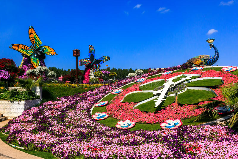 Zonnewijzer van bloemen op een achtergrond van vogels en vlinders royalty-vrije stock foto