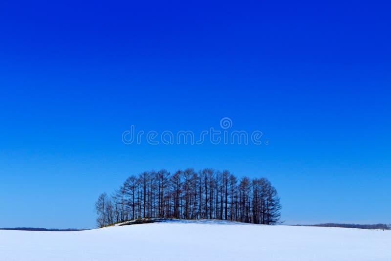 Zonnig de winterlandschap met sneeuw a en boombosje op weide De koude van Japan met blauwe hemel Wit gebied met klein bos in het  stock afbeeldingen