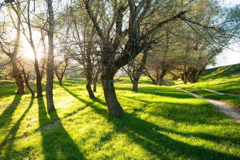 Zonnig groen bos met schaduw royalty-vrije stock afbeeldingen