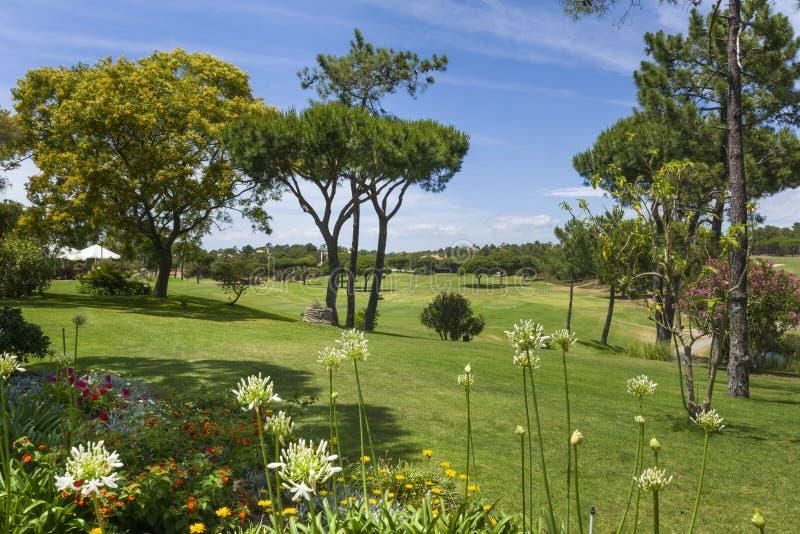 Zonnig landschap van golfcursus stock afbeelding