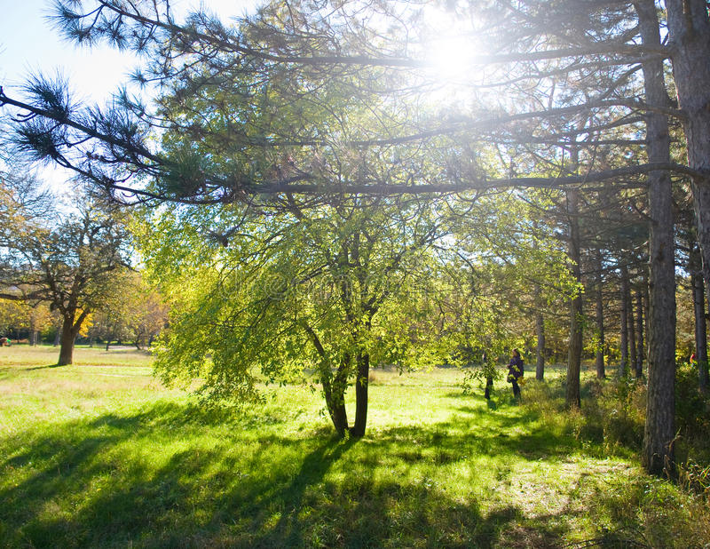 Zonnig park stock fotografie