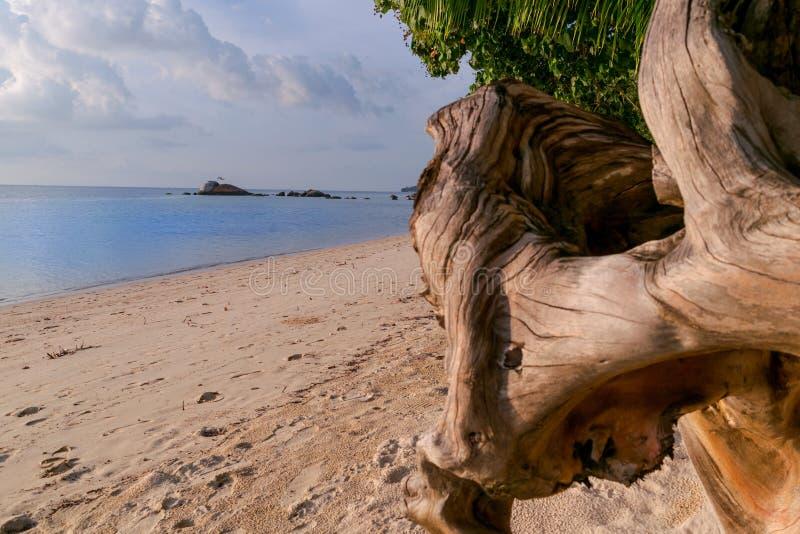 Zonnig strand in Koh Phangan stock foto's