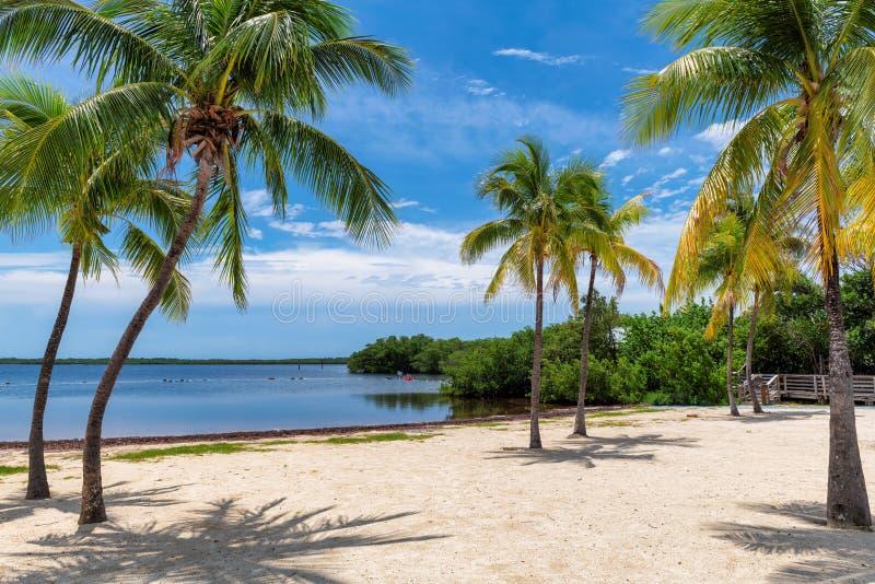 Zonnig strand met palmen en Caraïbische overzees royalty-vrije stock afbeeldingen
