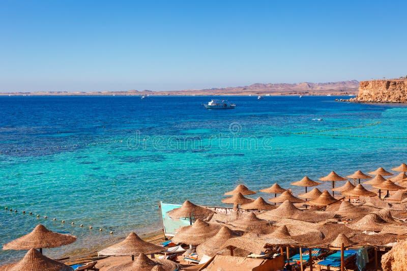 Zonnig toevluchtstrand met palm bij de kust van Rode Overzees in Sharm el Sheikh, Sinai, Egypte, Azi? in hete de zomer Mondelinge royalty-vrije stock foto