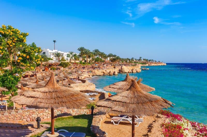 Zonnig toevluchtstrand met palm bij de kustkust van Rode Overzees in Sharm el Sheikh, Sinai, Egypte, Azi? in hete de zomer Helder royalty-vrije stock afbeeldingen