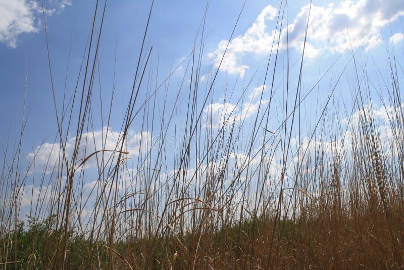 Zonnig, wolken, prairiegras, de lente, de zomer stock afbeeldingen