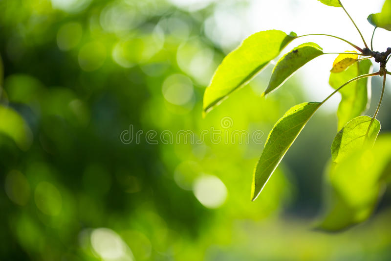 Zonnige abstracte groene achtergrond royalty-vrije stock fotografie