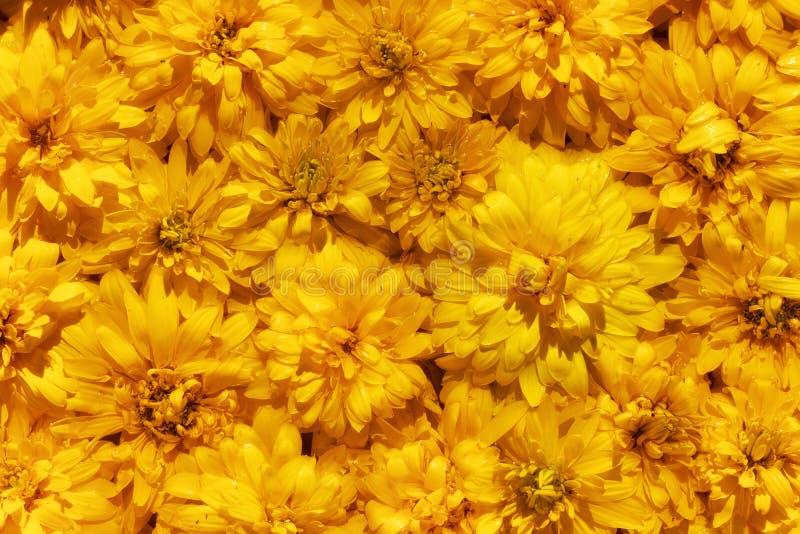 Zonnige achtergrond van gele bloemen royalty-vrije stock afbeeldingen
