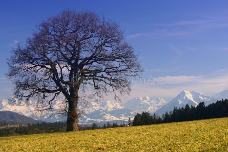 Zonnige Alpen royalty-vrije stock afbeelding