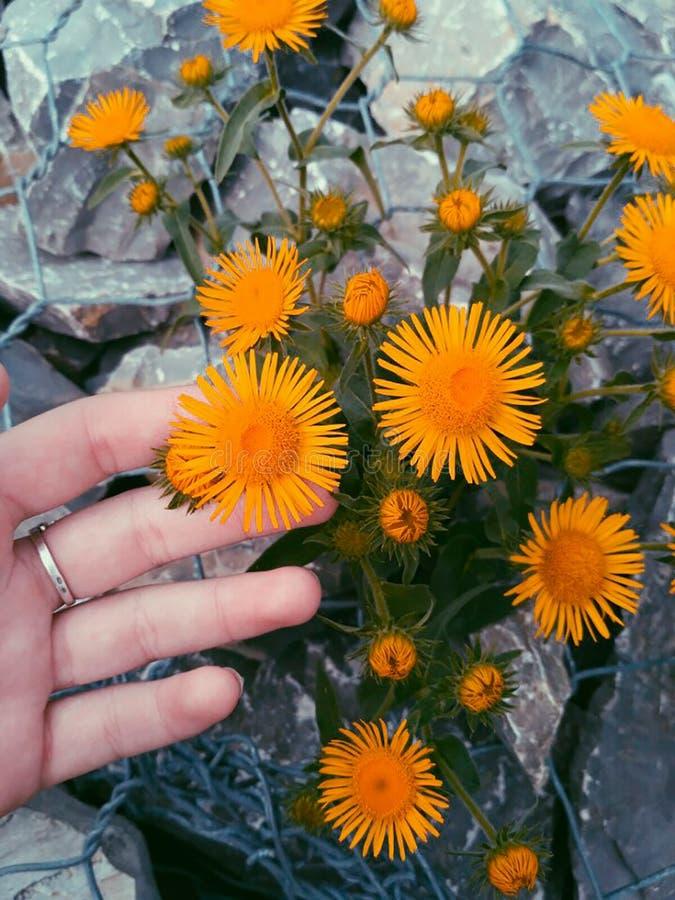 Zonnige bloemen stock foto's