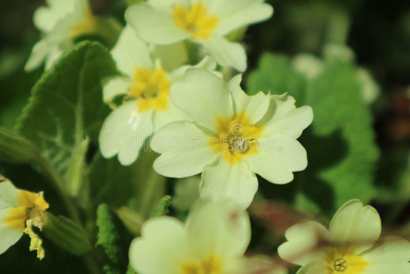 Zonnige bloemen royalty-vrije stock foto's