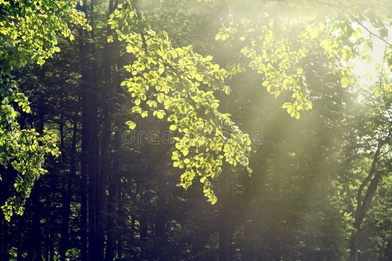 Zonnige boom stock afbeeldingen