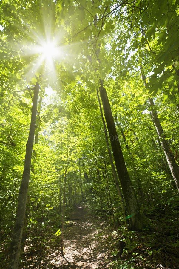 Zonnige bosweg stock foto's