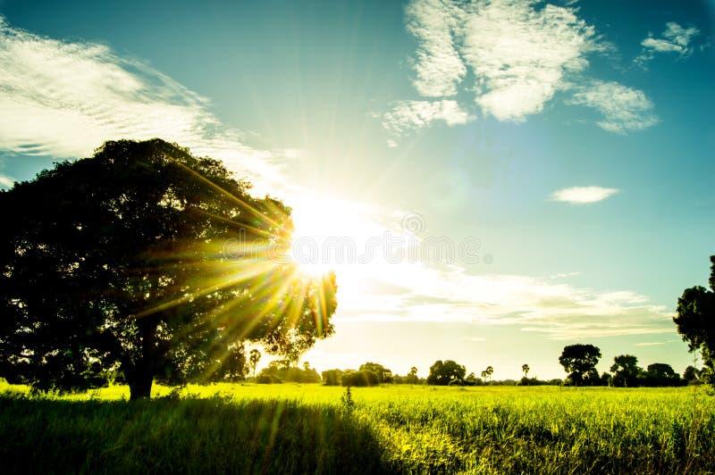 Zonnige dag in de aard met zon glanzende trog de boom stock fotografie